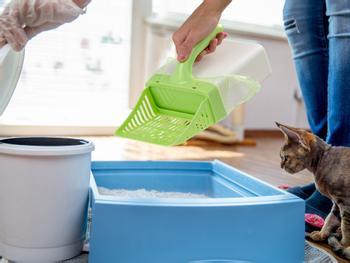 Scoop Up! Katzenstreuschaufel Mit Behälter